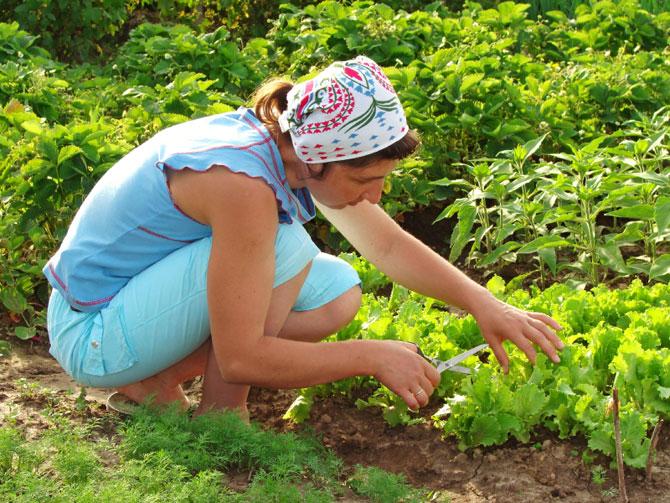 garden helper project zaniyan center